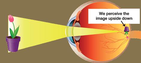 Improve Eye Vision