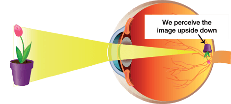 How Does Eye Vision Actually Work